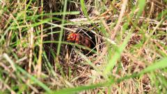 Hornet - nesting hole Stock Footage