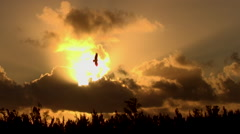 Stock Video Footage of sunrise with birds awakening