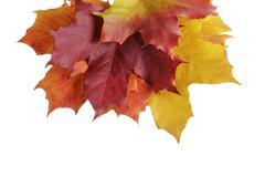 Maple autumn leaves border Stock Photos