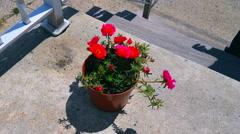 Little flowerpot  4K Stock Footage