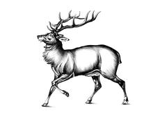 antique stag art drawing handmade nature - stock illustration