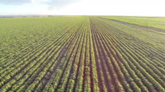 AERIAL: Agricultural field Stock Footage