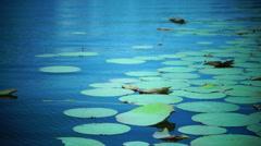 Lotus Leaves, Lake, Waves Stock Footage