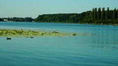 Turquoise Lake, Forest, Poplars Stock Footage