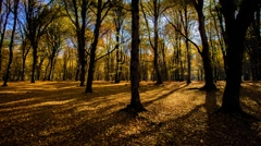 HDR Time lapse with moving tree shadows in mountain forest with sunbeams.Forest  - stock footage