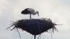 Storks are sitting in a nest on a pillar - stock footage