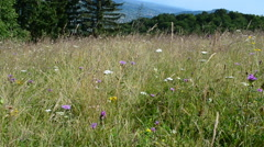Flowers in mountains Stock Footage
