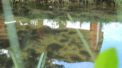 Two river fish trout swimming in the pond with clear water Stock Footage