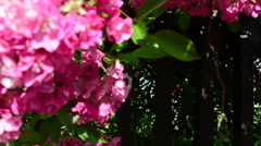 Flowers and fence, shooting of the house - stock footage