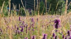 Shooting of wild mountain flowers slider Stock Footage
