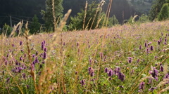 Background from wild flowers Stock Footage
