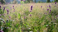 Beautiful wild flowers Stock Footage