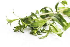 Goji leaf isolated on white background Stock Photos