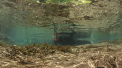 SNORKELER SWIMS IN CLEAR SHALLOW WATER – CLOSEUP - stock footage