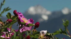 Flowers Blowing in the Wind in Rocky Mountains Stock Footage