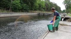 The man is feeding farmed trout Stock Footage