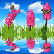 Hyacinth with dewy grass and butterflies - stock photo