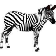 Zebra - Tanzania - Africa Stock Illustration