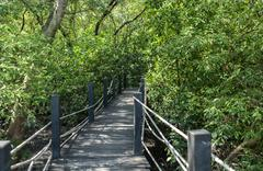 Stock Photo of Wood bridge in mangrove forest. Explore nature.