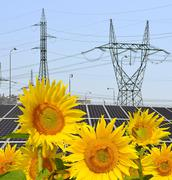 Sunflowers in the background solar panels and pylons  Stock Photos
