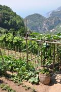 Vineyards Ravello hills, Amalfi Coast - stock photo