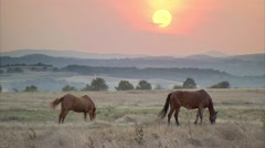 Wild horses at sunset in meadow Stock Footage