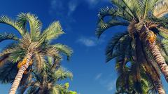 Palm trees against blue cloudy sky Stock Illustration