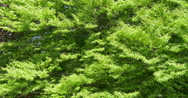 Stock Video Footage of green leaves background
