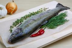 Raw trout - stock photo