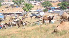 Pushkar Camel Fair Stock Footage
