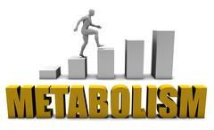 Metabolism Stock Illustration