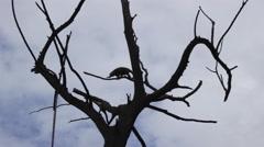 Monkey on the Tree 1 Stock Footage