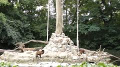 Monkeys on the animal playground zoo 1 Stock Footage