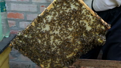 The Group of Bees in The Hive. Preparations Before Rocking Honey - stock footage