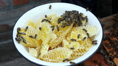 The Group of Bees in The Hive. Preparations Before Rocking Honey Stock Footage