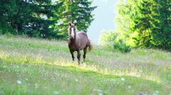 Horse Grazing in a Meadow Stock Footage