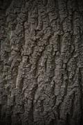 Tree bark texture background seamlessly tileable - stock photo