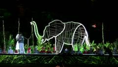 Wild elephant enters the stage during final rehearsal Stock Footage