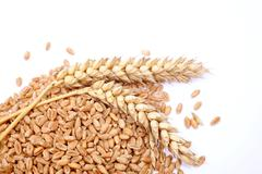 Wheat grains and cereals spike. Wheat isolated on white background - stock photo