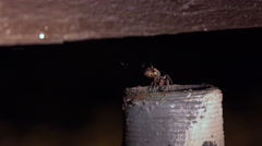 Spider crawls down into metal tube at night 4k Stock Footage