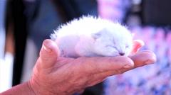 Sweet kitty cat Stock Footage