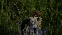Metal Grasshopper on old log Stock Footage