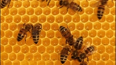 Bees convert nectar into honey Stock Footage