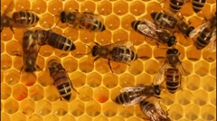 Bees convert nectar into honey 8715 K - stock footage