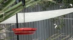 Soft focus slow motion hummingbird landing on feeder sharp background Stock Footage