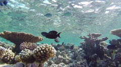 Maldives underwater world Stock Footage