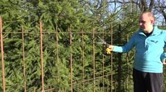 Male gardener man cut fir tree hedge with shear. 4K Stock Footage