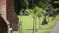 Cemetery Flowers in England Stock Footage