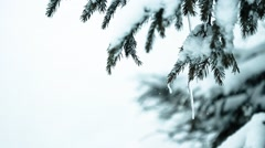 Spruce Tree Forest Covered by Snow in Winter Landscape - stock footage