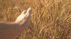 Wheat Field Hand Slide Stock Footage
